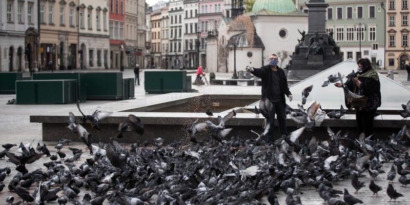 Lidé jsou doma a holuby ve městech nemá kdo krmit. Ani ty v polském Krakově.