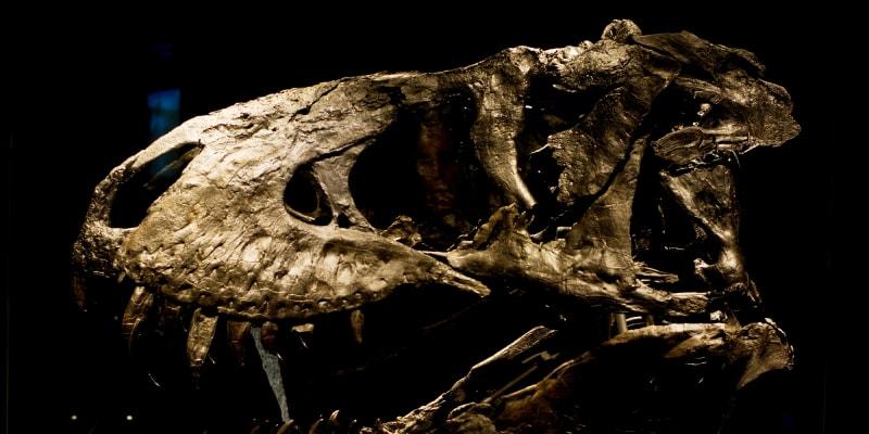 Na základě simulace vědci spočítali, že asteroid, který vyhubil dinosaury a změnil evoluci na Zemi, dopadl pod nejhorším možným úhlem 60 stupňů. Zdroj: Imperial College London