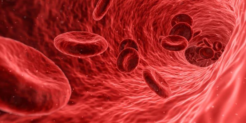 Vědci vyrobili syntetické červené krvinky, které mají všechny přirozené schopnosti těchto buněk.