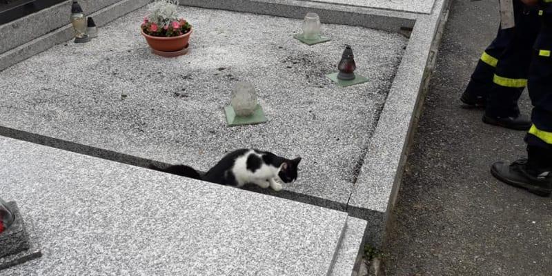 Kočka je opět na svobodě