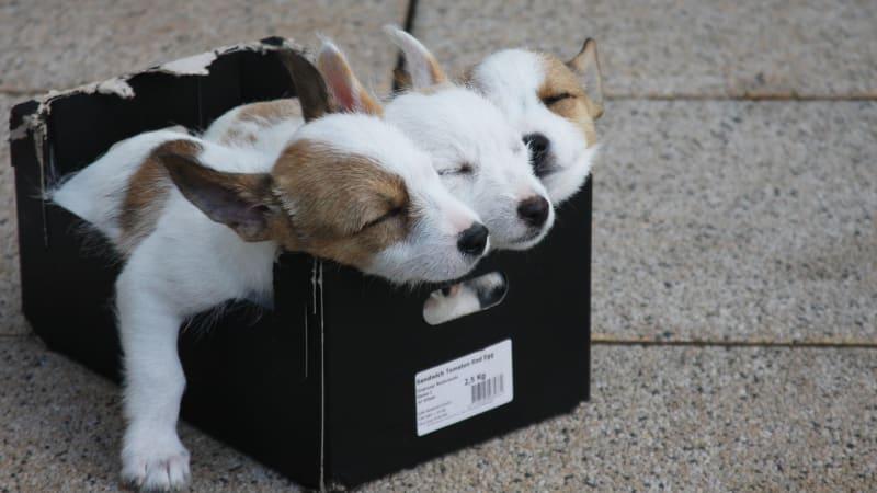 BLOG: Já to štěně bez PP přece zachránil/a aneb Krutý byznys poháněný soucitem