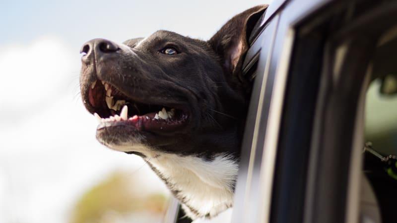 BLOG: Dovolená se psem: Jak na to, aby byla bezpečná pro všechny zúčastněné?