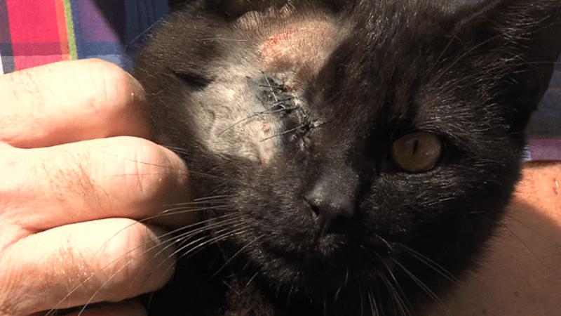 Policie na Semilsku pátrá po střelci. Zmrzačil nejméně dvě kočky