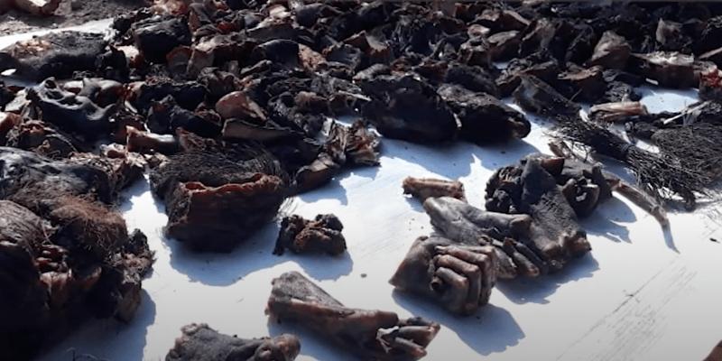 Obchodníci na pouličních trzích v Indii prodávají useknuté opičí ruce i sťaté rybí hlavy.