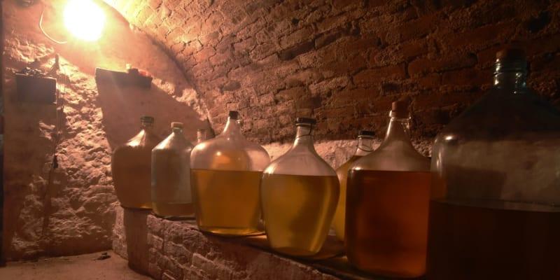 Kvasící víno ve sklepě v Pavlově