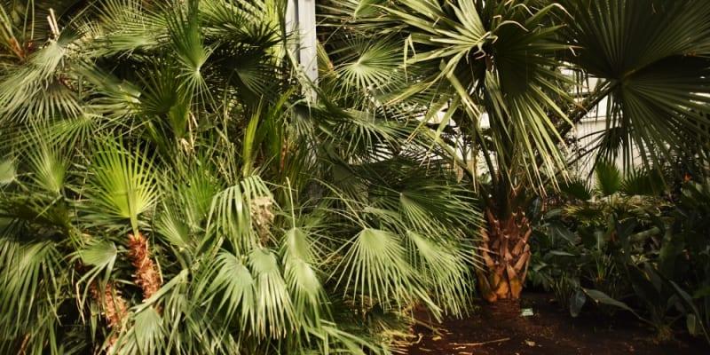 Interiér botanické zahrady