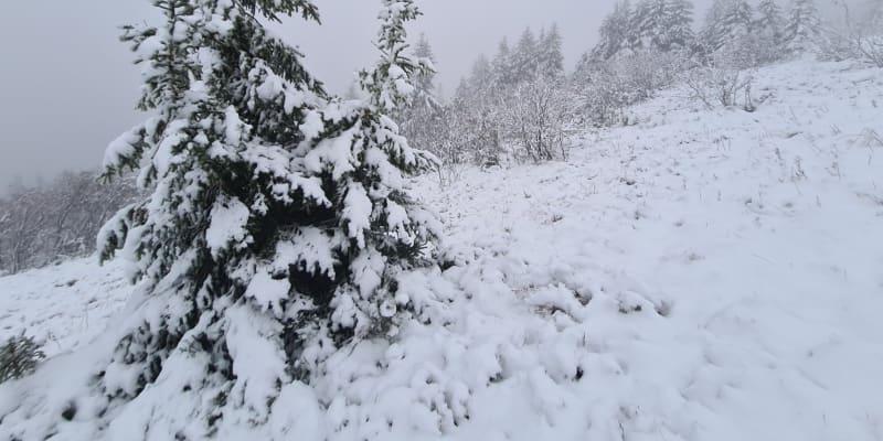 Na Šumavě napadl první sníh.