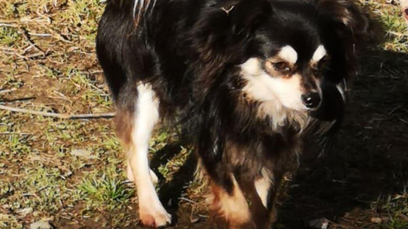 Hledáme domov psům zachráněným z množírny