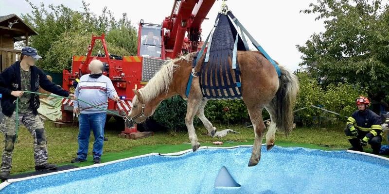 Záchrana koně ve Vysokých Popovicích