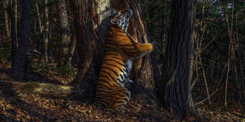 Objetí - vítězná fotografie Fotograf divočiny roku 2020 (Zdroj: Natural History Museum)