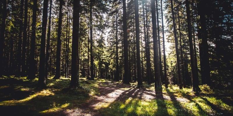Sluncem prozářený les cestou na vyhlídku