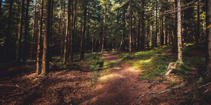 Krásné a čisté lesy v okolí Karlovy Studánky