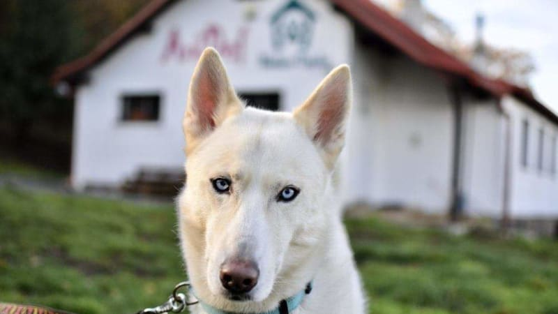KOMENTÁŘ: Psa v útulku vybírejte srdcem, ne očima
