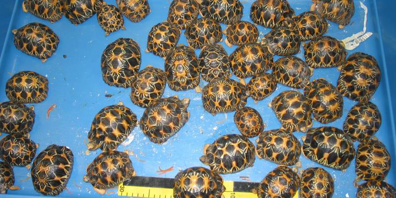 Češi jsou v pašování velmi vynalézaví. Foto: archiv ČIŽP