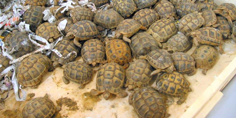 Množství zvířat se pohybuje v řádech tisíců až desetitisíců. Foto: archiv ČIŽP