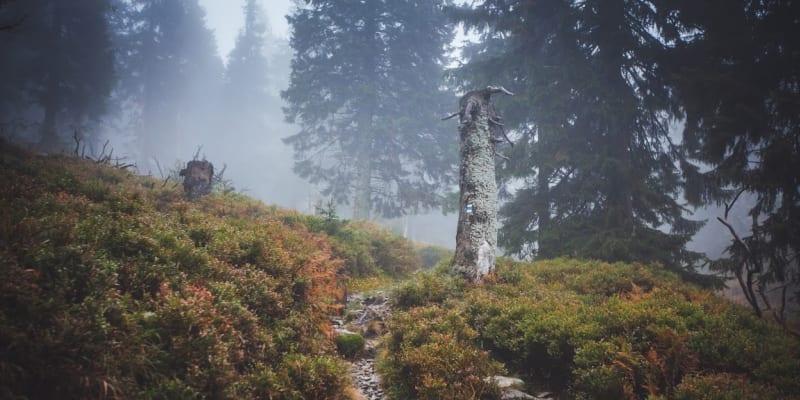 Tajemná pěšina v podzimní krajině divokých Jeseníků
