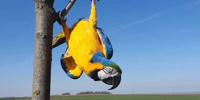 Jsou to velmi inteligentní ptáci. foto: Společnost Laguna