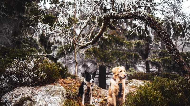 Nejlepší putování Českem se psem? Vítězí Kralický Sněžník a Divoký důl