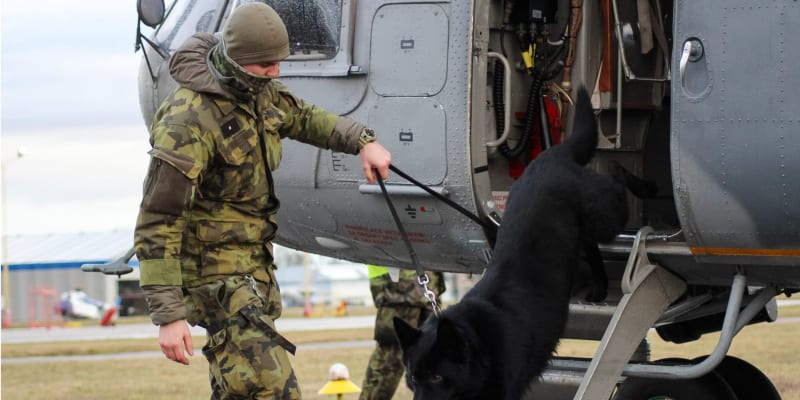 Výběr vhodného psa pro službu u vojenských jednotek je srovnatelný s rekrutačními požadavky na potenciálního vojáka, popisuje Armáda ČR.