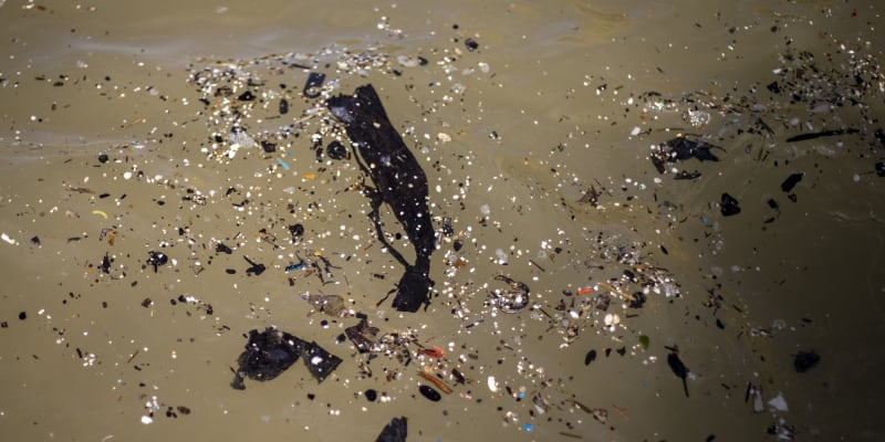 Na tamních plážích našli řadu mrtvých zvířat, od želv, ryb až po sedmnáctimetrového plejtváka.
