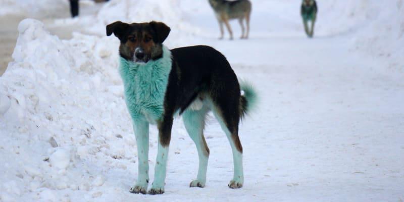 Ruskem se procházela smečka zelených psů.