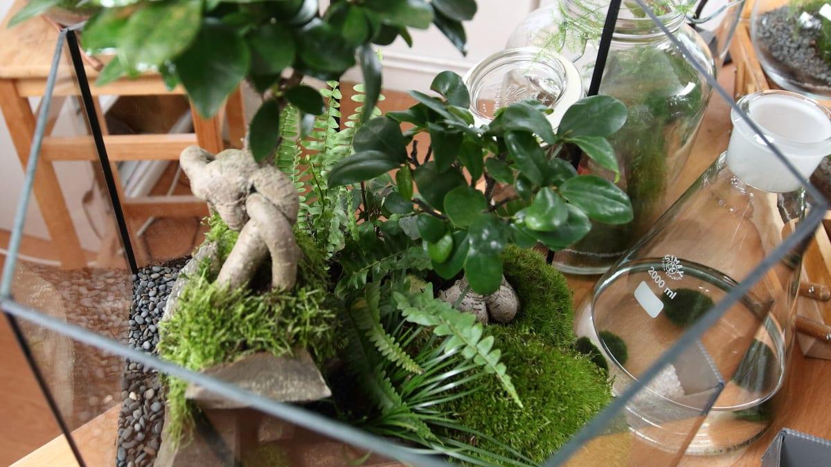 Živá zahrada se dá vybudovat i ve sklenici nebo v akváriu.