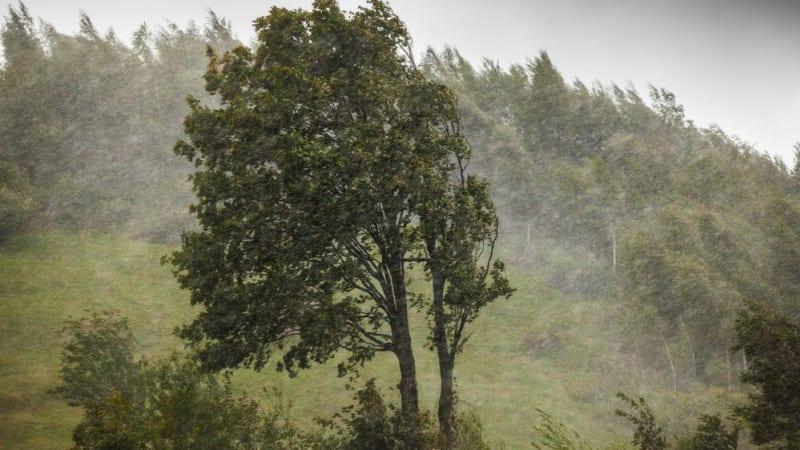 Kdo může za smrt řidiče, na kterého spadl starý strom? Ředitelství silnic vinu odmítá