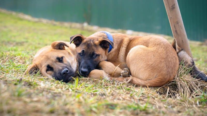 Psí a kočičí nalezenci, kteří málem nepřežili, hledají domov