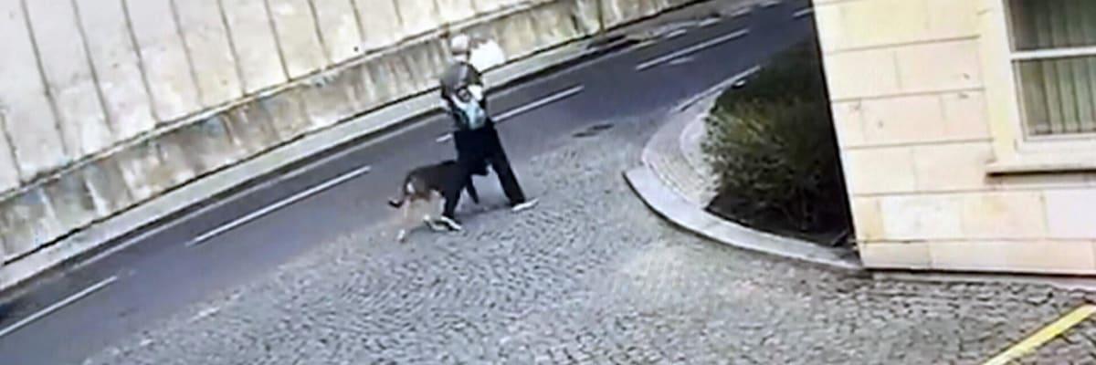 Útok na dítě na Petříně: Krátce předtím napadl pes jinou oběť. Policie označila viníka