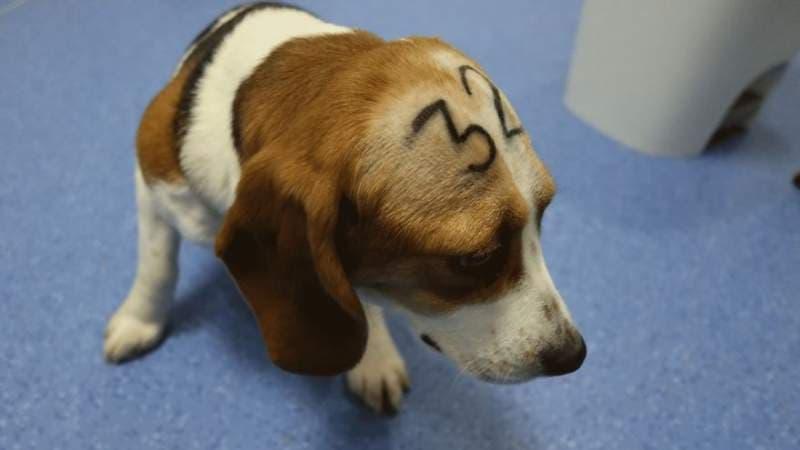 Ve španělské laboratoři týrali zvířata, úřady jí pozastavily činnost