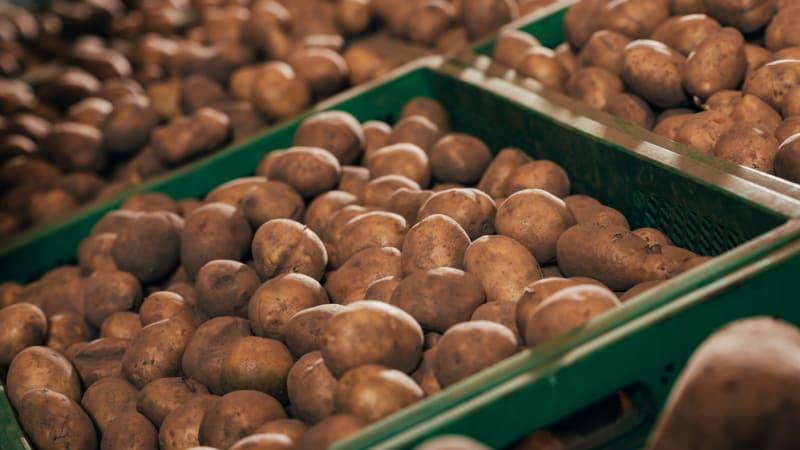 Šéf bramborářů: Prodáváme výrazně pod cenou, řada z nás na kompenzace nedosáhne