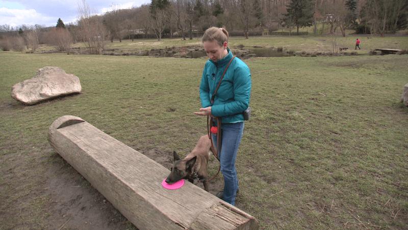 Samofixace: Jak psa vyčesat bez újmy, nám ukázala trenérka psů Radecha. Zkuste to i vy