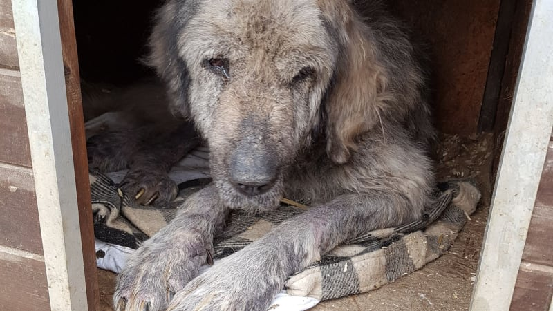 Očima psa číslo 651: Státní útulky v Rumunsku jsou doslova peklo na zemi