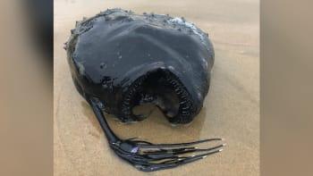 Moře vyplavilo monstrum z temných hlubin. Umí spolknout kořist o velikosti svého těla