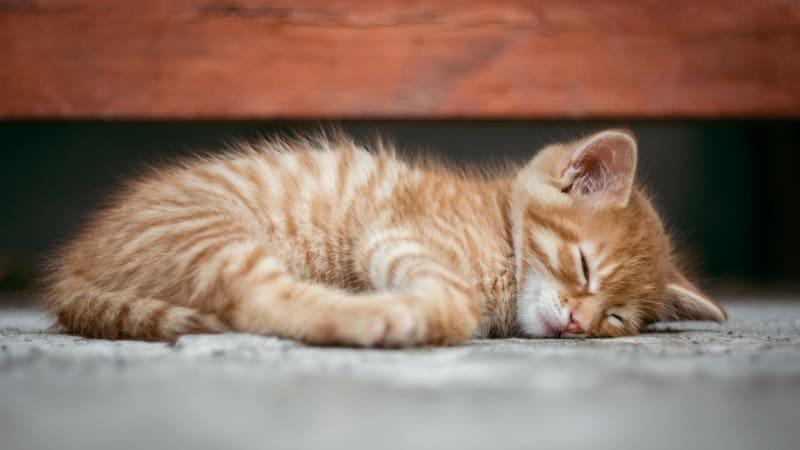 Zákaz krmení toulavých koček? Obecní vyhlášky jsou často v rozporu se zákonem
