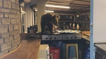 Strach po útoku medvěda: Další se dostal až do hotelu. Procházel se po sporáku
