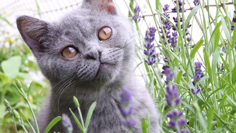 Česká senzace: Dříve než v Torontu zachránili kotě bez řitního otvoru u nás