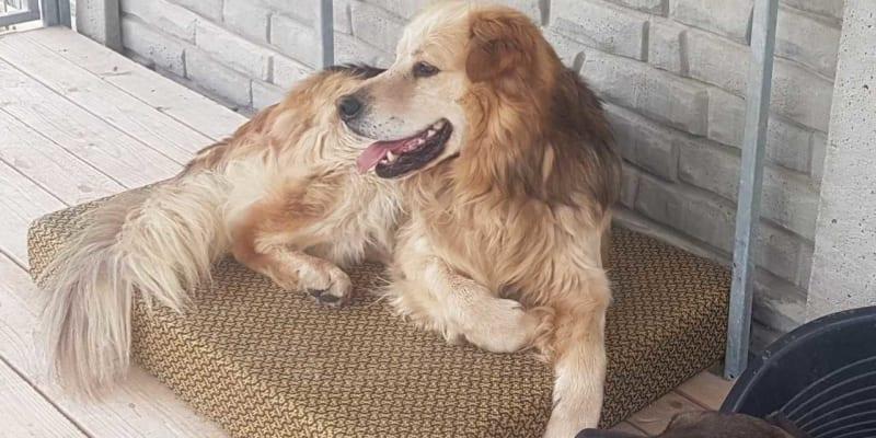 Pes nalezený v Hruškách