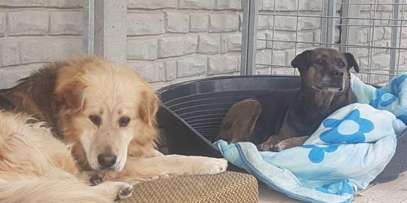 Pes a fenka nalezení v Hruškách