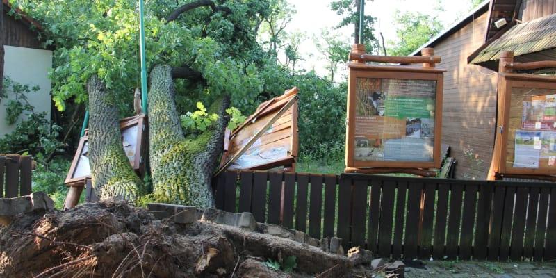 Zoo poničená tornádem.