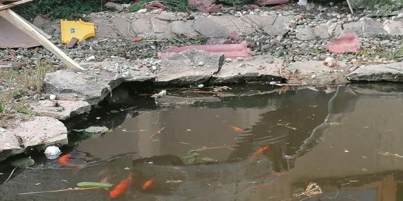 Ryby v okrasném jezírku tornádo přežily.