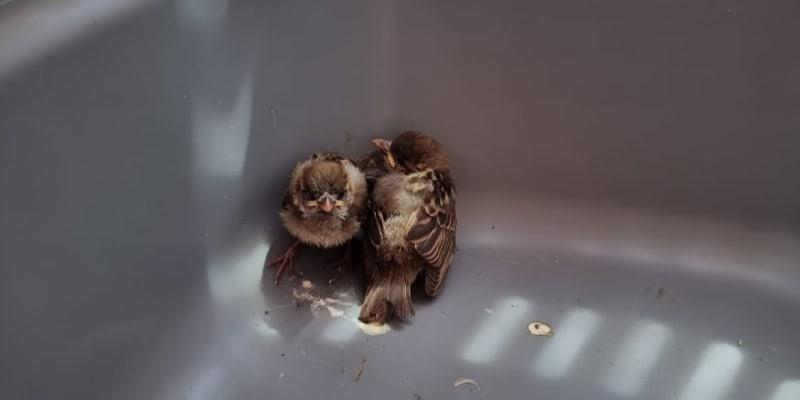 Pomoci se dostalo i ptáčatům.