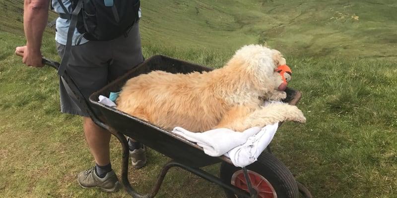 Carlos Fresco vyvezl svého umírajícího psa Montyho na jejich oblíbený vrchol. (autor: Facebook/The Brecon and Radnor Express)