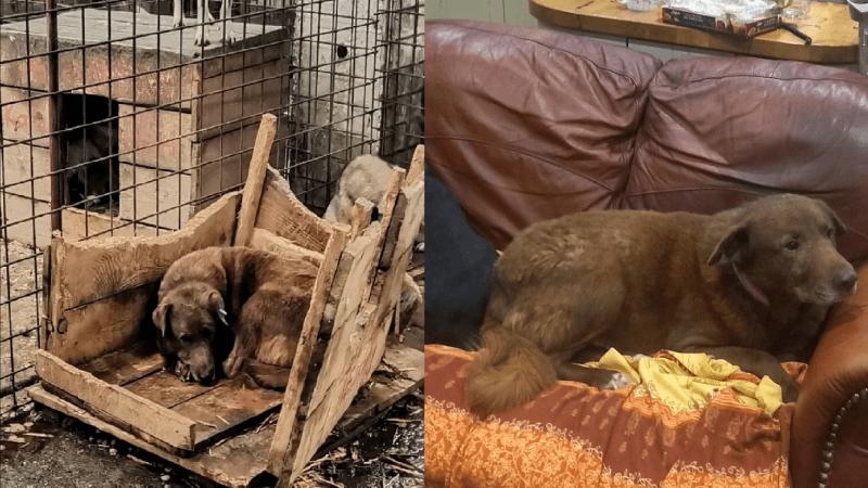 Virtuální adopce: Pomoc pro psy v zahraničí z vašeho gauče. Jak moc jim může změnit život?