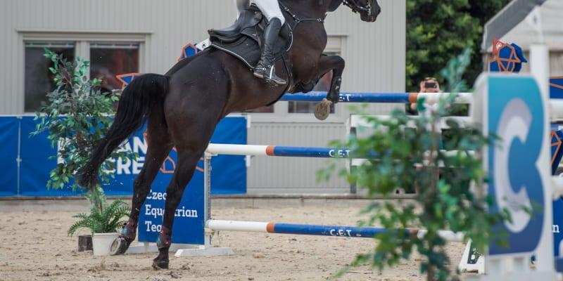 Jezdec Kamil Papoušek se svým koněm jménem Warness (autor: Kamil Papoušek)
