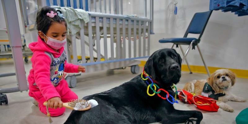 V chilské nemocnici využívají terapeutických psů při léčbě dětí.