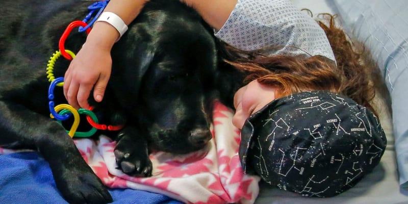 U více než 90 procent dětí terapeutičtí psi pomáhají snížit pocity strachu a znepokojení.