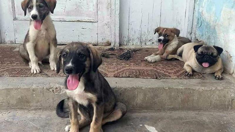 Kábulem zmítá chaos: Dvě stovky zvířat čekají v útulku na evakuaci