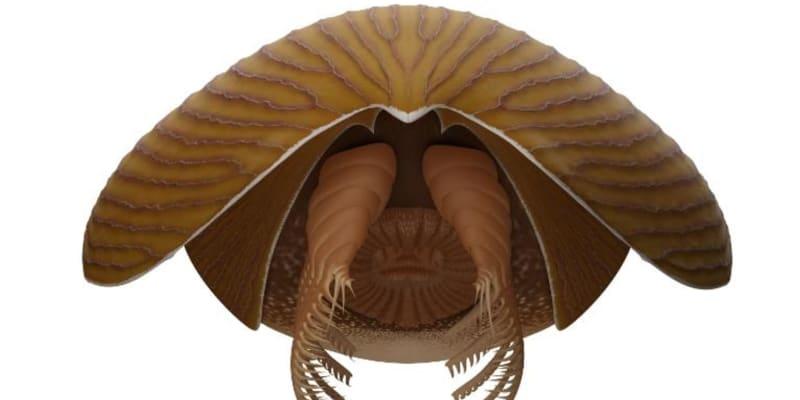 Titanokorys gainesi měřil na délku půl metru, v porovnání s tehdejším životem šlo o skutečného obra.