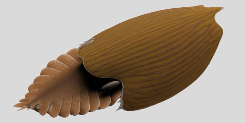 Titanokorys gainesi byl objeven v národním parku Kootenay v kanadských Skalistých horách.